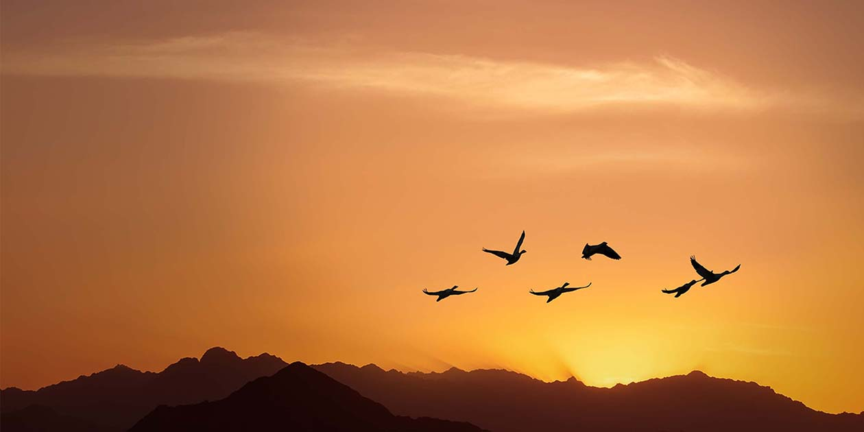 A photo of migrating birds at sunset that symbolizes the need to migrate away from software that will no longer be supported.